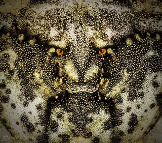 Devil in the Detail