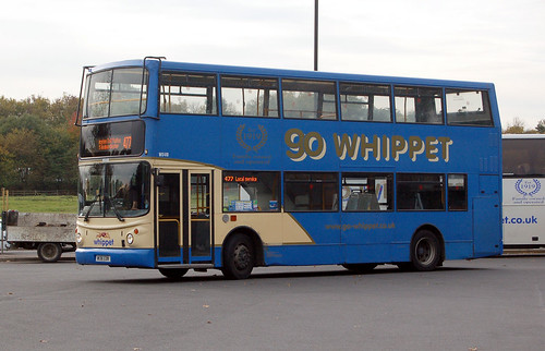 cambs - whippet wd410 huntingdon 03-11-16 JL