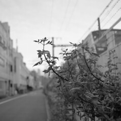161009_ZenzaBronicaS2_011 (Matsui Hiroyuki) Tags: zenzabronicas2 nikonnikkorp75mmf28 fujifilmneopan100acros epsongtx8203200dpi