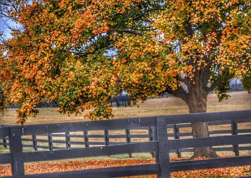 Autumn in the Horse Farm Country #autumn2016🍁 #fallcolors🍁🍂 #horsefarmcountry #naturephotography #sharethelex #kytourism
