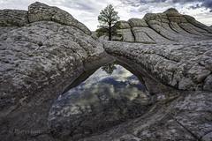 Lone Tree (Glenn Guinita) Tags: whitepocket lonetree arizona travel