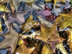(mahler9) Tags: mahler9 jaym photomatix 2016 lgg4 tonemapping colorefex november reflection