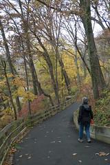 autumn walk (tcd123usa) Tags: leicadlux4 alapocaspark wilmingtondelaware nature autumn autumn2016 naturestextures alapocaswoods