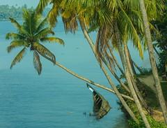 boat (Paul Varuni) Tags: kerala backwaters river boat palm
