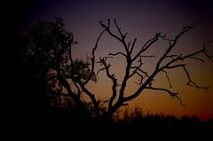 Couleurs d'hiver - Toulouse (31) (FGuillou) Tags: pentax k50 toulouse france francia tolosa tree shadow ombre coucher soleil hiver sky