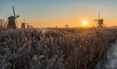 Kinderdijk Below Zero (Inky-NL) Tags: kinderdijk nikond750 vorst winter ijs molens natuur zonsopgang zonsopkomst ingridsiemons2016 frost sunrise earlymorning nederland netherlands windmills landscape landschap belowzero fx nikonfx tamronsp2470mmf28divcusd nature sun