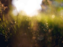 Bokeh Light Flood (trm42) Tags: grass bokeh summer finland directlight sunlight depth helsinki suomi dof