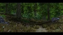 Skyrim SE - Forest Path (GameDuchess) Tags: skyrim skyrimspecialedition theelderscrollsskyrim elderscrolls theelderscrolls gaming gamergirls videogames girlgamers