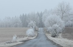 Walk in cold white. - Back to Brden. (:Linda:) Tags: germany thuriniga village veilsdorf hoarfrost road mist tree