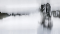 The Foggiest Idea (Mariette van Waard) Tags: nature trees motion blur long exposure