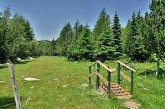 Running  Font-Romeu (Dam.R) Tags: nature montagne running vert paysage pyrnes chevaux fontromeu pyrnesorientales