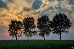 Four in a row (BraCom (Bram)) Tags: trees sunset holland clouds canon zonsondergang bomen corn nederland thenetherlands silhouettes wolken mais stellendam goereeoverflakkee gettyimage southholland vieropeenrij silhouetten fourinarow canonef24105mm bracom canoneos5dmkiii
