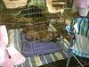 GreyhoundPlanetDay2008009