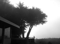 House on Garrapata Ridge Road/Big Sur, CA (LOLO Italiana) Tags: ca trees blackandwhite house nature silhouette fog buddha bigsur