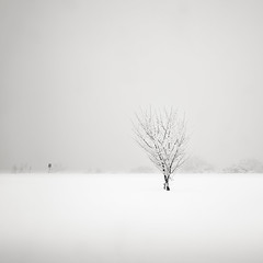 plum tree in snow (StephenCairns) Tags: winter snow japan plum ume gifu motosu stephencairns