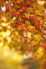 Maple Leaves in Autumn (Adam Turow) Tags: autumn color fall leaves vertical closeup landscape maple october colorful dof nj gardenstate mapleleaves parsippany morriscountynj parsippanynj scenicnj lakeparsippanynj mapleleavesinautumn