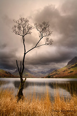 the lone tree -1080px (Paul Hayman) Tags: autumn cloud mountains reflection tree landscape scenery view forrest hiking lakes lakedistrict dramatic cumbria lonetree buttermere crag