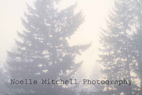Trees in the fog 2