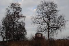 Birken (♥ ♥ ♥ flickrsprotte♥ ♥ ♥) Tags: strand meer bäume ostsee kiel falkenstein januar schleswigholstein 2014 schwäne wasserwacht birken