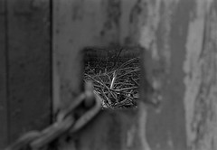 _24 (frostburg) Tags: f90 100tmx