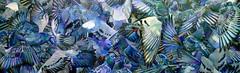 """""""Decreto n13.798 de dezembro do 2009"""" (Fonseca, Eduardo) Tags: painting am galeria paloma pintura bh pombos prefeito decreto eduardofonseca caixadodudu eduardofonsecacom dudufonsecacom vision:mountain=0554 vision:outdoor=084 vision:sky=0542 vision:plant=0533 amgaleria"""