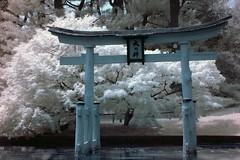 Gateway to the Sacred (dennoit) Tags: park newyorkcity lake newyork tree water brooklyn garden cherry botanical japanesegarden spring pond blossom infrared cherryblossom torii brooklynbotanicalgarden r72 japanesepond