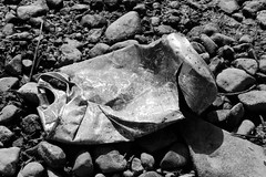 Beach Litter (pongyc) Tags: beach beer stones can pebbles dirty litter rubbish crushed