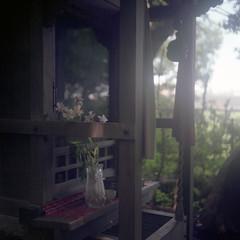 kawaguchi76nc-film66 (yaplan) Tags: flower film ikoflex memory  66