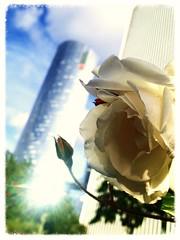 Défense naturelle (gerard avedissian) Tags: nature fleur moderne ville ladéfense réflexion