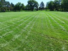 Newly mown (lindakowen) Tags: park summer green grass landscape lawn mowed converginglines