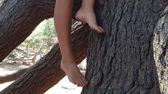 Tree climber (lisabeebe) Tags: treeclimbing climbingtrees climbingatree