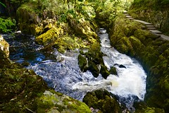 River Doe (rustyruth1959) Tags: nikon nikond3200 tamron16300mm yorkshire yorkshiredales ingleton waterfallstrail waterfallswalk river riverdoe water outdoor path moss green rocks watercourse