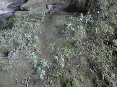 Guizhou China cave 平坝飞虎山大洞 (黔中秘境) Tags: guizhou china cave cavem caves caving cccp speleo asia 中国洞穴 中国 贵州洞穴 贵州 洞 山洞 洞穴 大自然 亚洲
