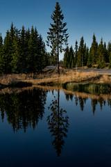 Mirror Man (e-box 65) Tags: hedmark norwegen no lillehammer norge norway sjusjen see baum tree sea reflection mirror spiegel