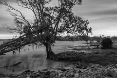_MG_6870 (norberto.endo) Tags: puntaindio riodelaplata rio blancoynegro blackwhite longexposure
