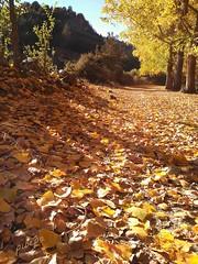 Color otoal, calor estival. (pibepa) Tags: 1001nights pibepa pedraza rodelosrboles otoo hojas