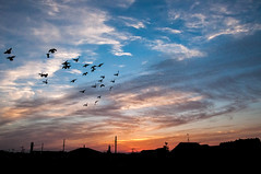 Untitled (Yuta Ohashi LTX) Tags: sunset    bird