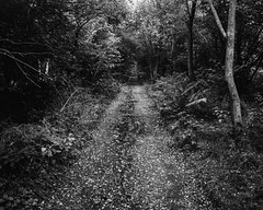 Bridleway (Hyons Wood) (Jonathan Carr) Tags: toyo45a largeformat 4x5 5x4 bw black white monochrome abstract abstraction landscape rural northeast ancient woodland