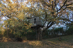 Tree (Theresa Best) Tags: tree treehouse autumn fall october illinois midwest theresa best sprouting visions theresabest sproutingvisions fmsphotoaday swing canon canon760d canont6s