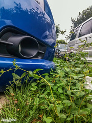 (CapBels 2) Tags: car blue low chevrolet cruze grass coche azul bajo auto chevy