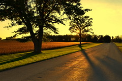 go big: the long view (joy.jordan) Tags: road field trees sunset landscape 52by52