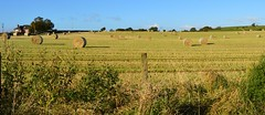 Ayrshire, Scotland. Straw Bales. (Phineas Redux) Tags: ayrshirescotland scottishfarms ayrshire scotland