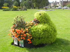 Teddy Bear, Grant Park, Forres, Morayshire, August 2016 (allanmaciver) Tags: teddy bear forres moray flowers green grant park topiary style beautiful great tidy display local allanmaciver