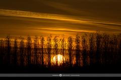SUNSET HALLOWEEN