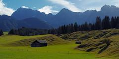 Buckelwiesen (g e g e n l i c h t) Tags: buckelwiesen gebirge scheune wald fichten schatten nokton 25mm lumixgx7 landschaft panorama werdenfelserland karwendel