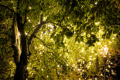 Sparrow Park (h_cowell) Tags: lights sparkle tree leaves decorated illuminate illuminated night evening dark treetrunk magical fairylights twinkling starburst panasonic gx7 20mm appicoftheweek