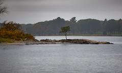 ...a lone tree at Odiorne... (jamesmerecki) Tags: lonetree tree odiornestatepark rye nh newhampshire seacoast shoreline