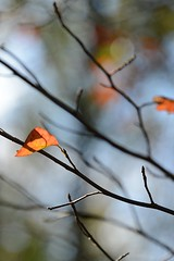 foggy morn (courtney065) Tags: nikond600 nature landscapes depthoffield foliage leaves autumn trees artisticphotography abstract minimalism flora