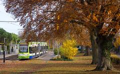 Autumn Tram (McTumshie) Tags: 20191119 2540 croydon lloydpark london londontrams tfl tramlink transportforlondon autumn leaves passengertransport tram tramstop transport trees southcroydon england unitedkingdom