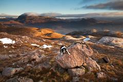Your Mission, Should You Choose To Accept It.... (svensl) Tags: bert border collie dog canine torridon hiking scotland schottland scottish